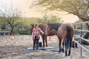 equine experiential coaching sessions